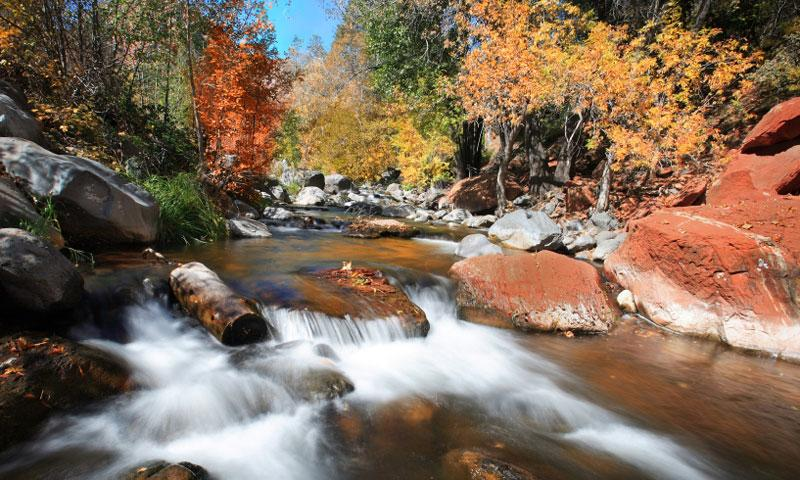 Fall Colors in Oak Creek Canyon in Sedona Arizona